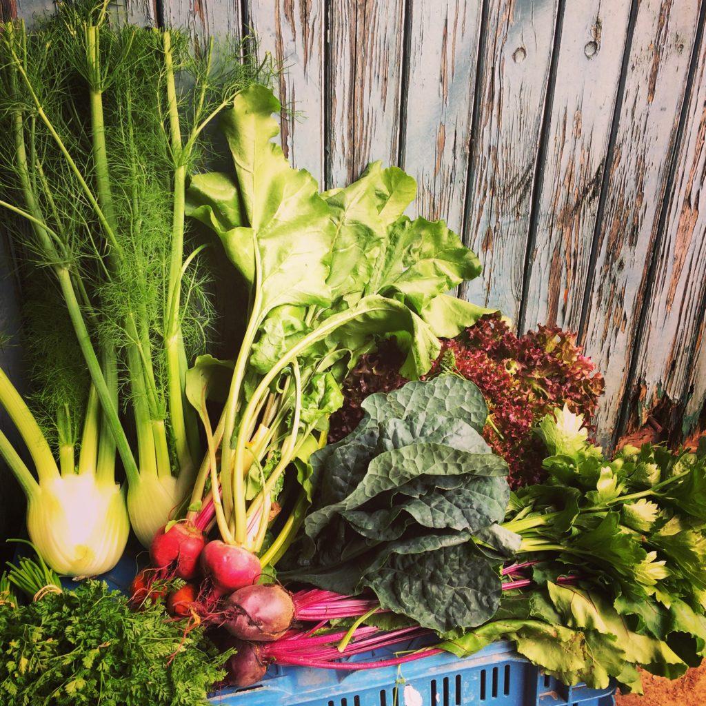 zelfoogst, zelfoogsttuin, biologische groenten, pluktuin, zelfoogstboerderij, abonnement, csa, groentepakketten, groentepakket, bio, lokaal, veldverkoop, dynamiscch, landbouw, gezond eten, biologisch voedsel, hoevewinkel, bioboer